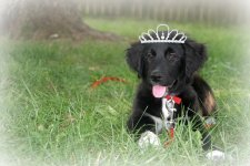Princess Dixie.jpg